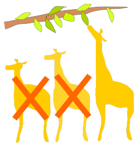 Giraffe-selection-process